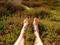 Male legs on dry heather bush. Tired legs on rocky peak bove landscape. Pure pink skin, clear nails. Heather twigs with gentle pink violet blossoms Royalty Free Stock Photos
