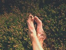 Male legs on dry heather bush. Tired legs on rocky peak bove landscape. Pure pink skin, clear nails. Heather twigs with gentle pink violet blossoms Royalty Free Stock Photo