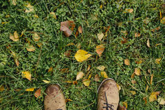 Male legs in leather boots on a background of green grass and yellow leaves. Male legs in leather boots on a background of green grass and yellow fallen leaves Royalty Free Stock Images