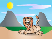 Male lion Stock Images