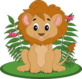 Male lion cub Royalty Free Stock Images