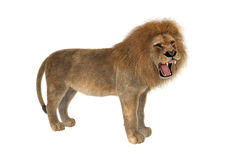 Male Lion Stock Photos