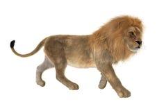 Male Lion vector illustration