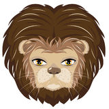 Male Lion Head Royalty Free Stock Image