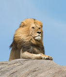 Male Lion on rock, Serengeti, Tanzania Stock Photo