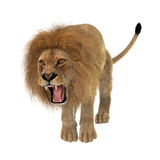 Male Lion on White Royalty Free Stock Images