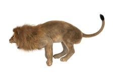 Male Lion on White Royalty Free Stock Photo