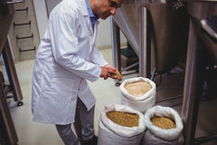 Male manufacturer examining barley at brewery Royalty Free Stock Photos
