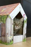 Funny marble cat in carboard handcraft house royalty free stock photo