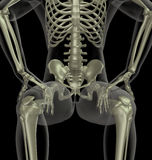 Male medical skeleton Stock Photography
