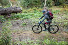 Male mountain biker riding bicycle in the forest Royalty Free Stock Images