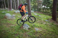 Male mountain biker riding bicycle in the forest Royalty Free Stock Photos