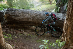 Male mountain biker riding bicycle in the forest Stock Photography