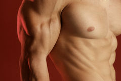 Male muscle Stock Photo