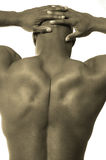 Male muscle back stock photo