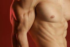 male muskel arkivfoto