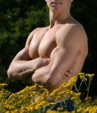 male muskulös torso Arkivbilder
