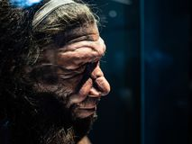 Male Neanderthal replicate exhibited in​ Natural​ History​ Museum, London.​ . Headshot​ of​ male Neanderthal stock photography