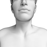 Male neck anatomy artwork Stock Photography