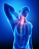 Male neck pain. 3d rendered medical x-ray illustration of transparent male Skeleton with neck and blue background Royalty Free Stock Image