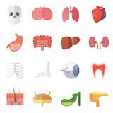 Male och kvinnlig anatomi Vektorillustrationuppsättning av mänskliga organ vektor illustrationer