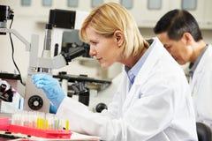 Male och kvinnliga forskare som använder mikroskop i laboratorium Royaltyfria Bilder