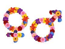 Male och kvinnligsexsymbol Arkivbild