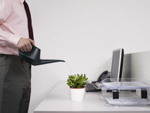 Male Office Worker Watering Desk Plant Stock Photos