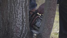 Male old forester cutting tree trunk with powersaw. Unrecognizable senior Caucasian man working in garden on sunny
