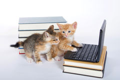 Male orange tabby kitten looking at miniature laptop type computer. Female calico tortie sitting behind looking at screen. Piles of books next to and under royalty free stock image