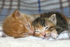 Male Orange Tabby kitten sleeping next to sister tortie torbie kitten Stock Photo