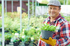 Male with plant Stock Photography