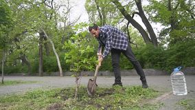 Male planting a tree stock video footage