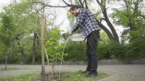 Male planting a tree stock footage