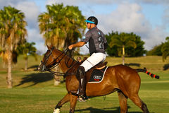 Male Polo Player Stock Photo