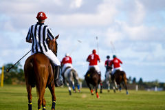Male Polo Player Royalty Free Stock Photo