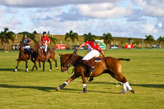 Male Polo Player. Illustrates the Polo World championships in Barbados. Captain Noel Edwards from the England Polo Team racing with Captain Victor Lodurum from Stock Images