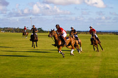 Male Polo Player Stock Image