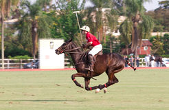 Male polo player. Of the Brazilian team at the Helvetia polo Country Club in Indaiatuba Brazil Stock Image