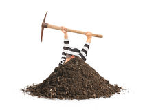 Male prisoner digging a hole and trying to escape. Isolated on white background royalty free stock photo