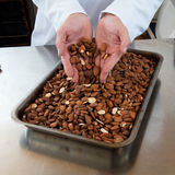 Male professional hands showing roasted almonds for sweet craftsmanship specialty Royalty Free Stock Photography