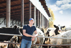 Male rancher in a farm. With cattle at  background Stock Image