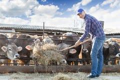 Male rancher in a farm Stock Photo