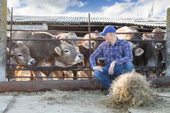 Male rancher in a farm Royalty Free Stock Images