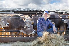 Male rancher in a farm. Portrait of a positive male farmer on a farm near cows Stock Photos