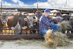 Male rancher in a farm Stock Image