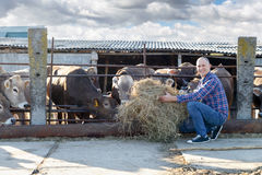 Male rancher in a farm Royalty Free Stock Photos