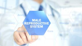 Male Reproductive System, Doctor working on holographic interface, Motion. High quality , hologram Royalty Free Stock Photos