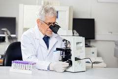 Male Researcher Using Microscope In Lab. Senior male researcher using microscope in medical laboratory Royalty Free Stock Photography