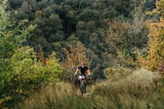 Male rider cyclist riding uphill among woods and grass. Privetnoye, Russia -  September 22, 2016: male rider cyclist riding uphill among woods and grass during Stock Photo
